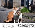 猫 52968472