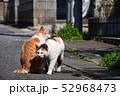 猫 52968473