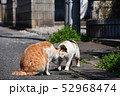 猫 52968474