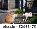 猫 52968475