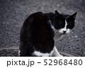 猫 52968480