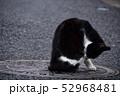 猫 52968481