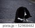 猫 52968482