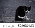猫 52968483