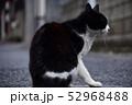 猫 52968488