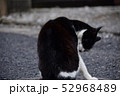 猫 52968489