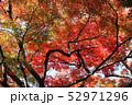 愛媛県大洲市稲荷山公園の紅葉 52971296