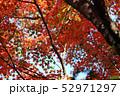 愛媛県大洲市稲荷山公園の紅葉 52971297