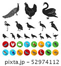 Types of birds black,flat icons in set collection for design. Home and wild bird vector symbol stock 52974112