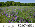 花 緑 畑の写真 52974651