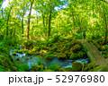 大山 新緑 初夏の写真 52976980