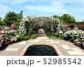 東武トレジャーガーデンのバラのアーチ。ポールズ・ヒマラヤン・ムスク・ランブラー(5月)群馬県館林市 52985542