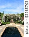 東武トレジャーガーデンのバラのアーチ。ポールズ・ヒマラヤン・ムスク・ランブラー(5月)群馬県館林市 52985703