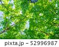 新緑 若葉 エコの写真 52996987