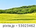 三ノ倉高原の菜の花 53023462