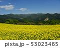 三ノ倉高原の菜の花 53023465