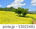 三ノ倉高原の菜の花 53023481