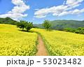 三ノ倉高原の菜の花 53023482