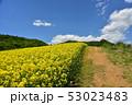 三ノ倉高原の菜の花 53023483