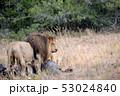 獲物 狩り 動物の写真 53024840