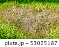 area of dry grass can not grow, something cover 53025187