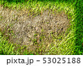 area of dry grass can not grow, something cover 53025188