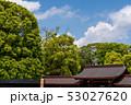 新緑の明治神宮 本殿 53027620