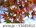愛媛県大洲市稲荷山公園の紅葉 53083812
