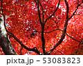 愛媛県大洲市稲荷山公園の紅葉 53083823