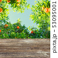 樹木 樹 ツリーの写真 53095001