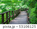 緑 池 道の写真 53106125