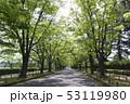 ケヤキ並木 53119980
