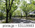 ケヤキ並木 53119983