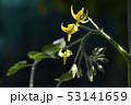 花 フラワー つぼみの写真 53141659
