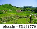風景 和束 お茶の写真 53141779