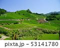 お茶 緑 緑色の写真 53141780