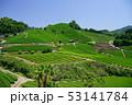 お茶 緑 緑色の写真 53141784