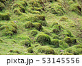 四国カルスト高原 53145556