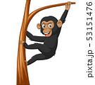 Cartoon baby chimpanzee hanging in tree branch 53151476