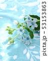 ブルースターの花束 53153863