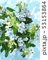 ブルースターの花束 53153864