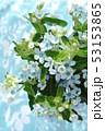 ブルースターの花束 53153865