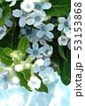 ブルースターの花束 53153868