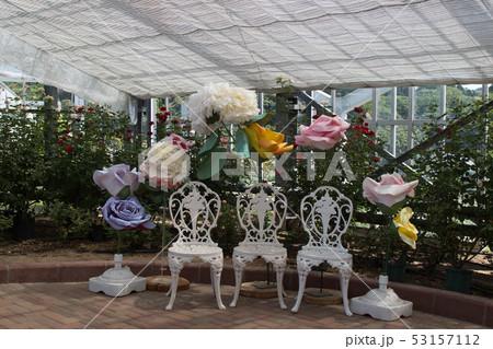 薔薇といす 53157112