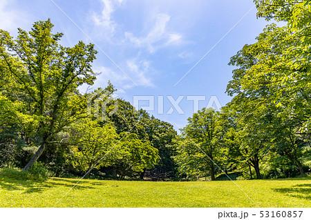 瑞々しい新緑の木 53160857