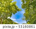 新緑 写真 青空の写真 53160861