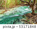 川 森林 林の写真 53171848