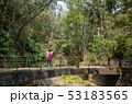 女性 森林 林の写真 53183565