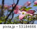 植物 花びら 花の写真 53184666