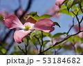 植物 花 葉の写真 53184682
